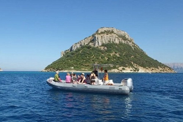 Dolphin Watching in Rubber Boat Excursions & Activities